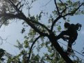 Curso de NR 18 - Poda de Árvores