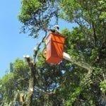 Curso Poda de Árvores NR 31