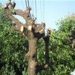 Treinamento Poda e Abate de Árvores NR 31