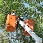 Treinamento Poda de Árvores NR 31