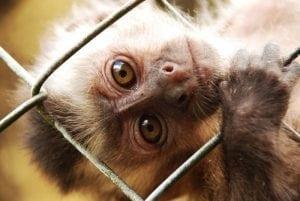 Treinamento Captura e Contenção de Animais