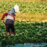 3107 - Treinamento De Reciclagem Do Trabalhador Rural