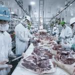 3602 - Treinamento Periódico na Indústria de Abate e Processamento de Carnes e Derivados