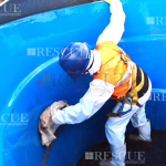 Curso Limpeza e Desinfecção de Caixas de Água