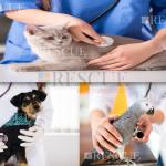 Curso Manuseio de Pets