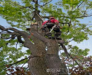 Curso Poda de Árvore em Linha Morta com Motosserra