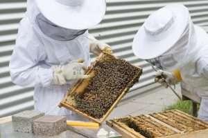 curso de apicultura