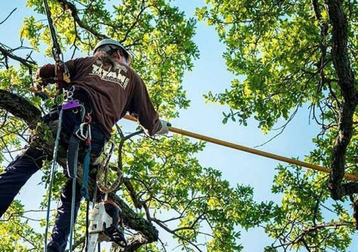 Curso Poda e ou Abate de Árvores NR 31